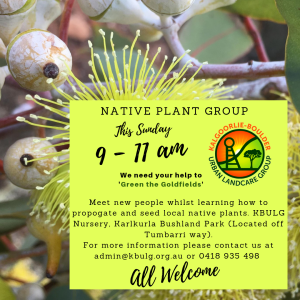 Native Plant Group (4)